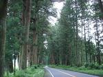 060716 杉並木.JPG